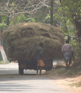 Neyyattinkara - petty businesses and pensioners (2014)
